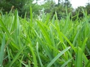 Augustinus gräsklippningsmaskiner