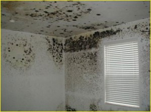 Cleaning mildew from walls and ceilings
