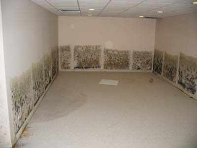 moldly drywall in