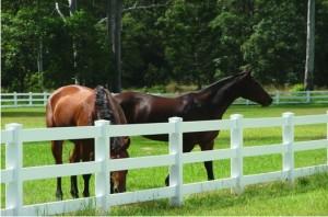 Paarden omheiningen