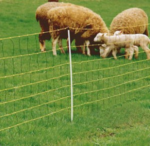 Building an electric fence for sheep