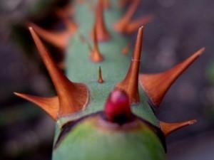 Aprenda a clipe de espinhos roseira