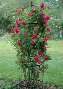 Flowers, How to build a rose pillar
