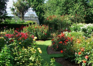 Tips for rose gardening