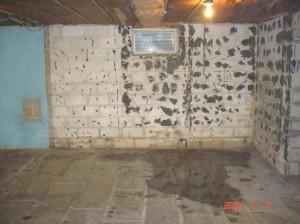 ¿Qué opciones tiene para la sustitución de pisos de sótano húmedo