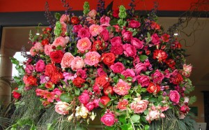Växande och sprider rosor