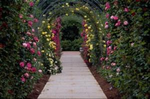 Enrejado tipos de rosales trepadores