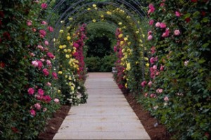 Trellis tipos de rosas de escalada