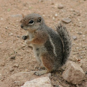 Ways of making handmade squirrel repellents