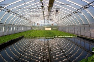 An introduction to Aquaponics