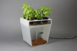 Aquaponic system kit or DIY project?
