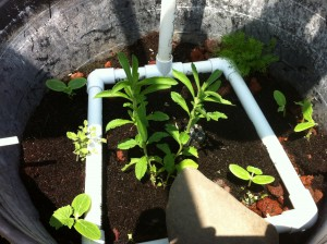 Irrigation in aquaponics