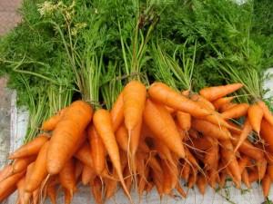 Hydroponic carrots