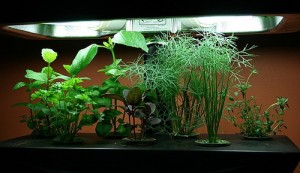 Hydroponic water culture system