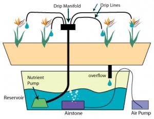 Hydroponic Drip system