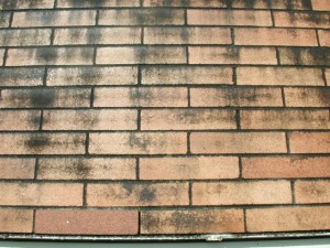 Brick mildew prevention