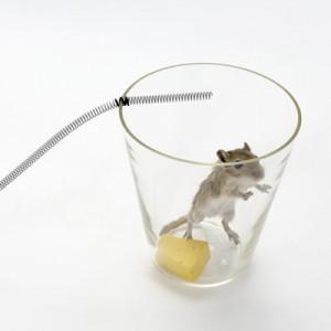 Verhindern Befall von Ratten und Mäusen