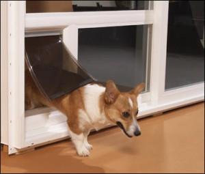 Instalación de una puerta para mascotas