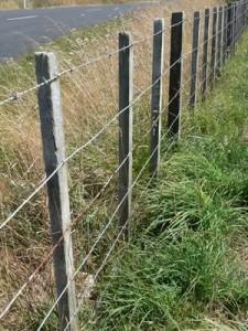 Tasarımı bir dikenli tel çit inek