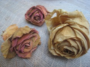 Drying fresh roses