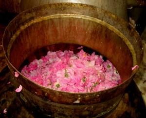 Come rendere acqua di rose