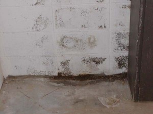 La humedad del sótano