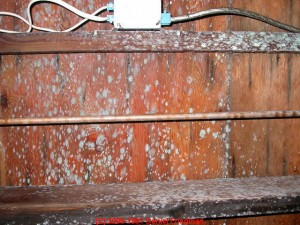Treating crawlspace mold