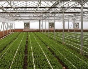 Uppvärmning av växthus med fotogen