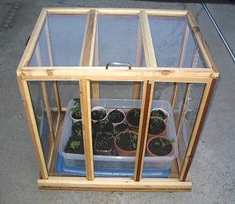 Miniatyr växthus
