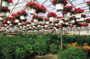 Anläggningar för växthus