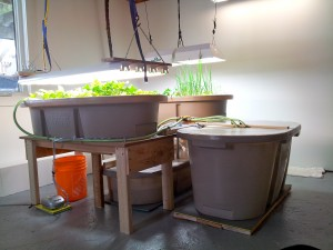 Aquaponics and colder climates