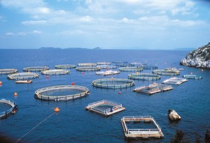 What means Aquaculture?