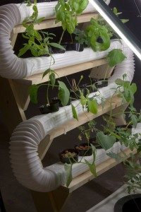 A couple of things you should know about working with a hydroponic system
