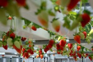7 myths about hydroponics