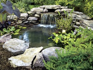 Pond Aeration
