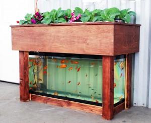 Choosing a fish tank