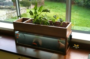 Aquaponics without the use of electricity