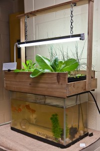 DIY aquaponic system