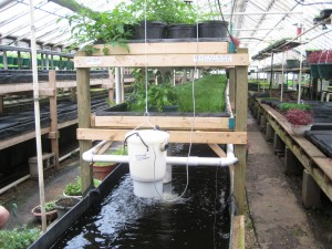 Maintenance and aquaponics