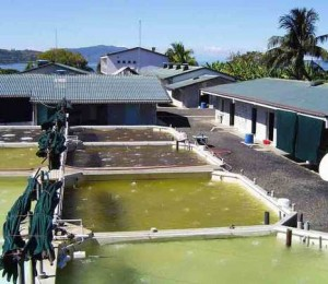 Inland saline aquaculture