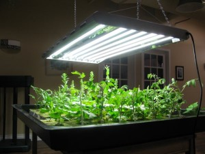Fluorescent growing lights