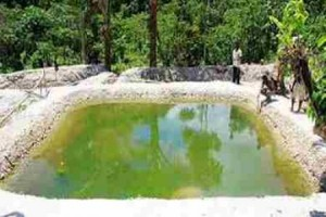 Aquaculture and water quality
