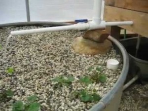 Common problems in aquaponics