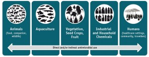 Antimicrobials and aquaculture