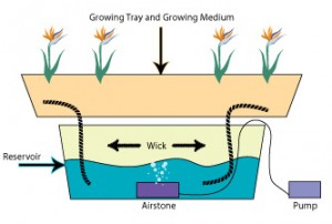 The hydroponic wick system
